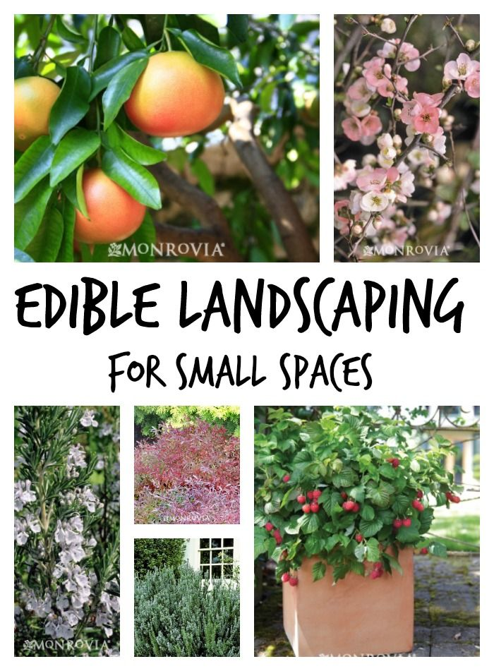 edible landscaping plants for small garden spaces gardening