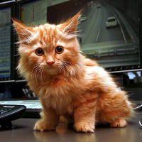 Dodge S Big Adventure Kitten Found In The Burnley Tunnel