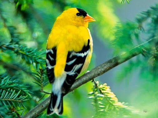 BIRDS ! BIRDS ! - Comunidade - Google+