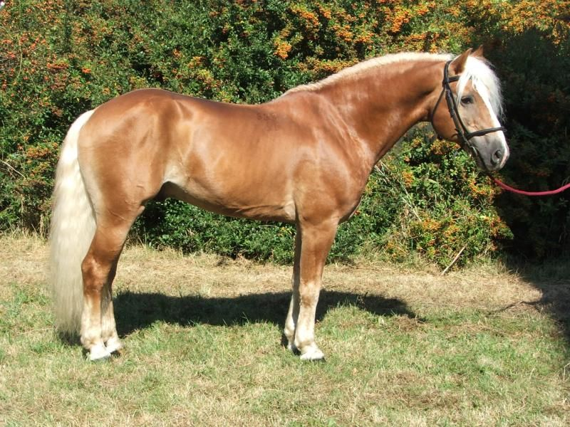 Allegro Horses Warmblood Horses Beautiful Horses