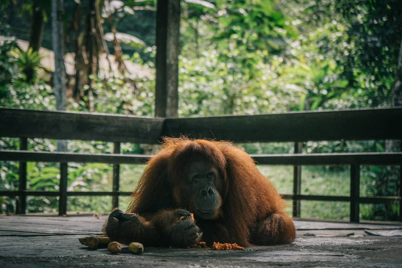 2 Weeks in Borneo and Brunei The Perfect Itinerary for