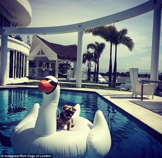 The swan pool float is the accessory of choice for celebs such as Taylor Swift - and rich ...