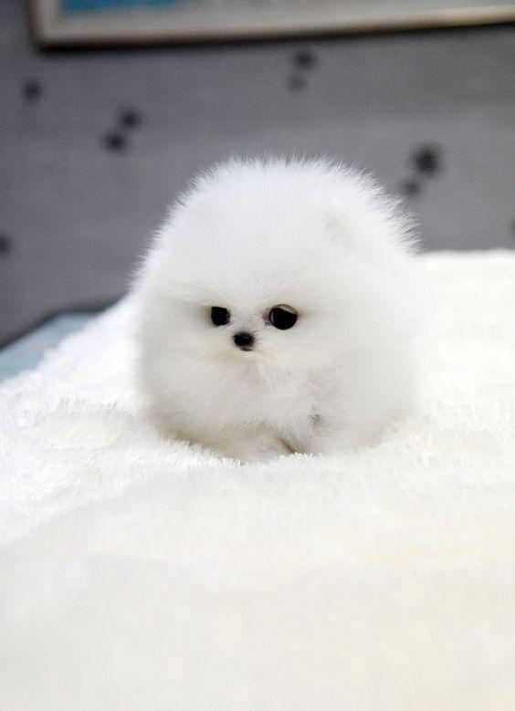 Teeny Tiny Puppies Guaranteed To Make You Say