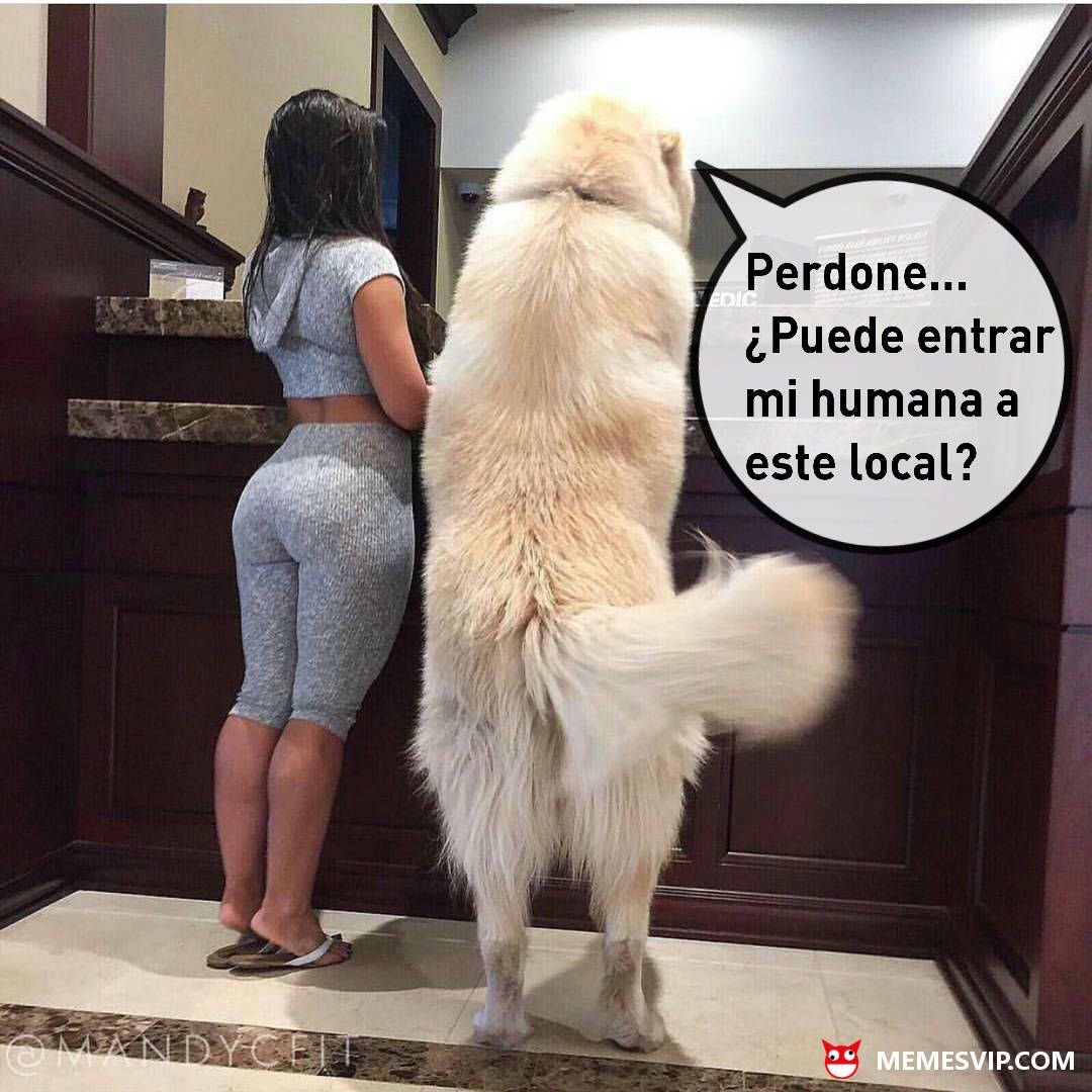 Meme Mascota Humana - Memes En Espa U00f1ol