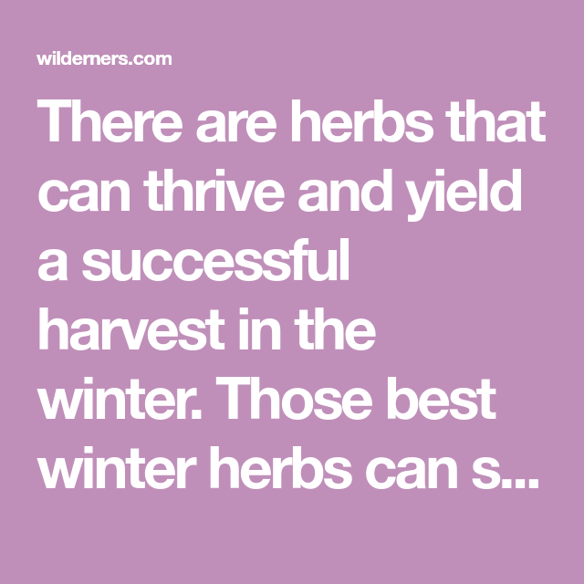 15 Best Winter Herbs That Will Grow Successfully In Cold