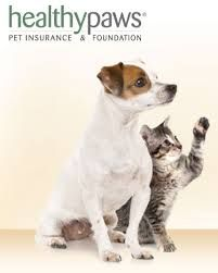 Affordable Pet Insurance For Families With One Or Multiple Pets