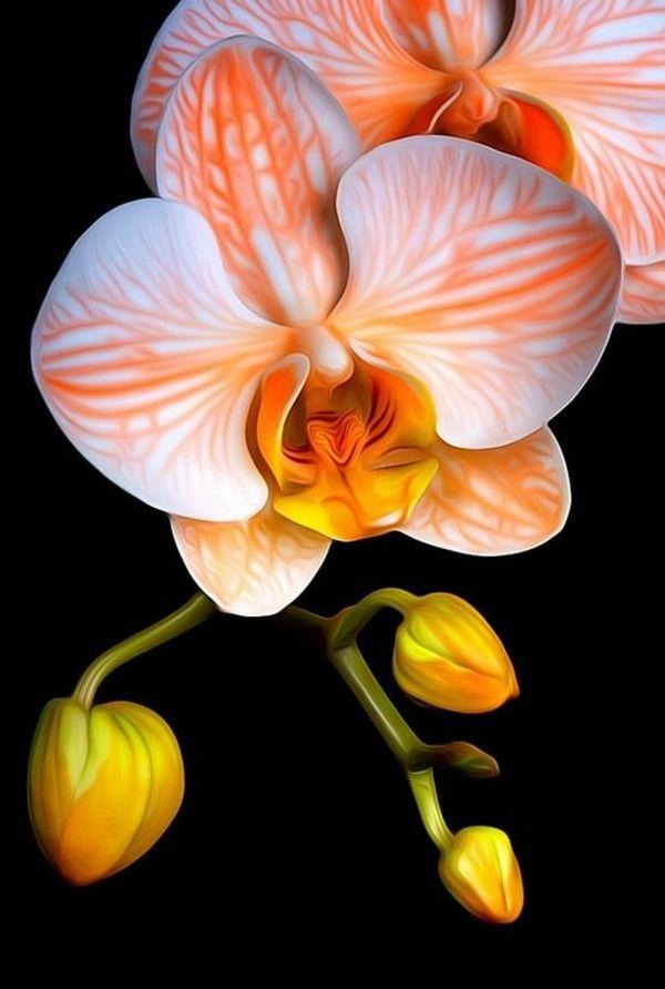 Garten pflanzen orchideen orange orchidee orchideen pinterest garten pflanzen orchideen orange orchidee altavistaventures Images