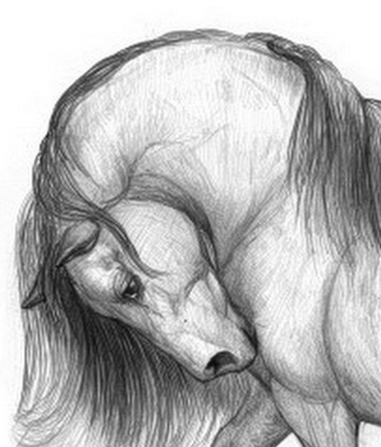 Dibujos A Lapiz Bonitos Y Faciles Buscar Con Google Horse Drawings Art Horse Art