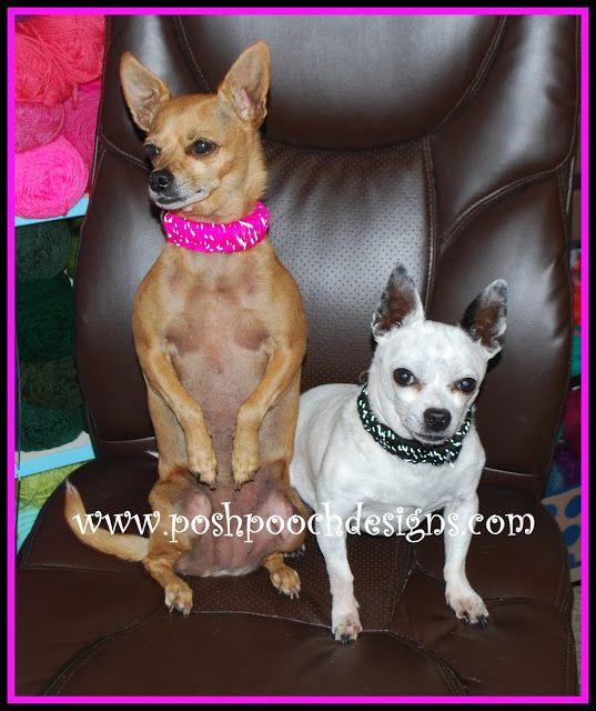 Posh Pooch Designs Dog Clothes Reflective Yarn Dog Collar Crochet