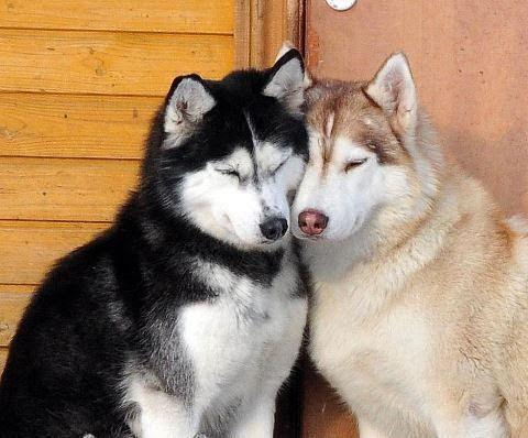 Pin von Kerstin auf Tierbilder (mit Bildern) Hunde
