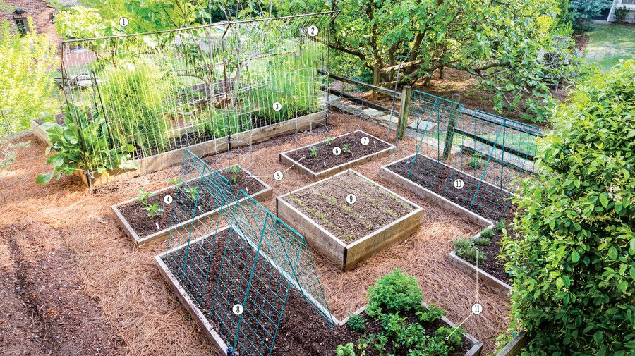 This Birmingham Couple Reaps 500 Pounds Of Produce From Their 600 Square Foot Garden Veggie Garden Layout Garden