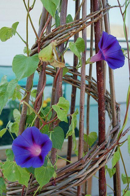 Pin By Xavier Guillaume On Dream Garden Garden Vines Plants House Plants