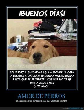 Amor De Perros El Amor Mas Puro E Incondicional Que Veremos Siempre I Love Dogs Funny Animals Dog Love