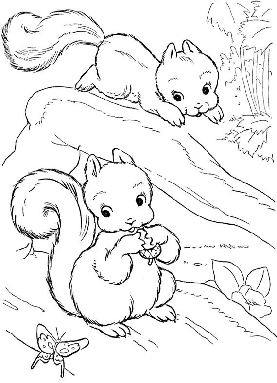 Baby Squirrel Coloring Pages Squirrel Coloring Page Coloring Pages Online Coloring Pages