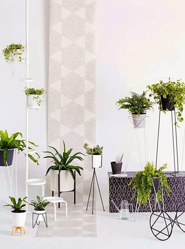 pin von mika i auf zimmerpflanzen pinterest zimmerpflanzen. Black Bedroom Furniture Sets. Home Design Ideas