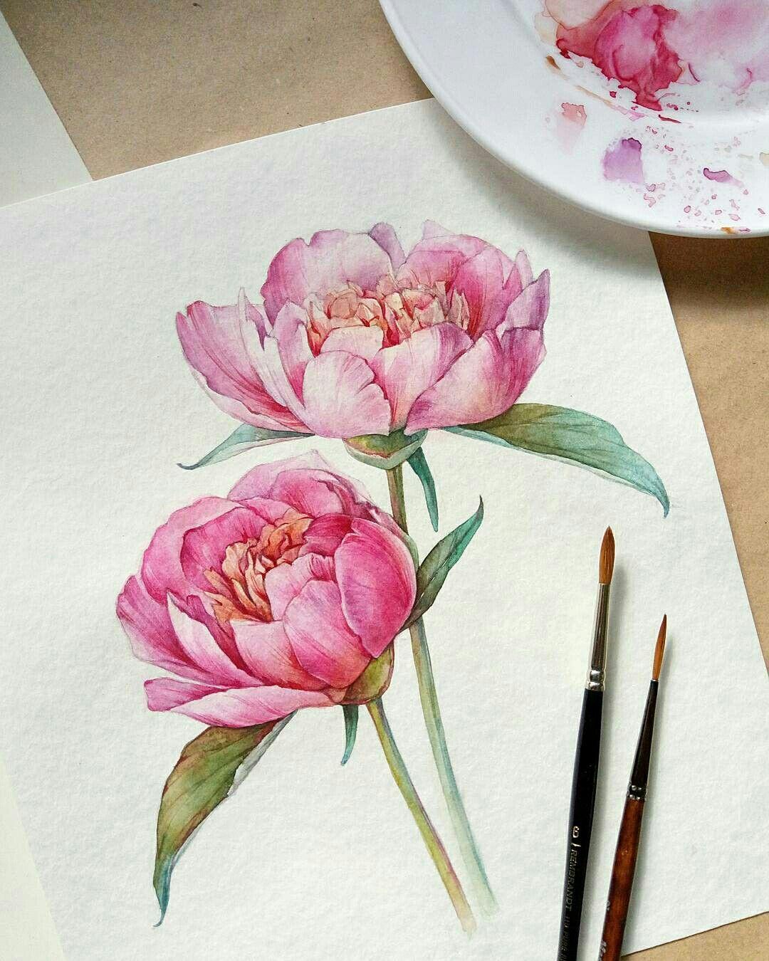 Pinterest X0 Jesss Pfingstrosen Zeichnung