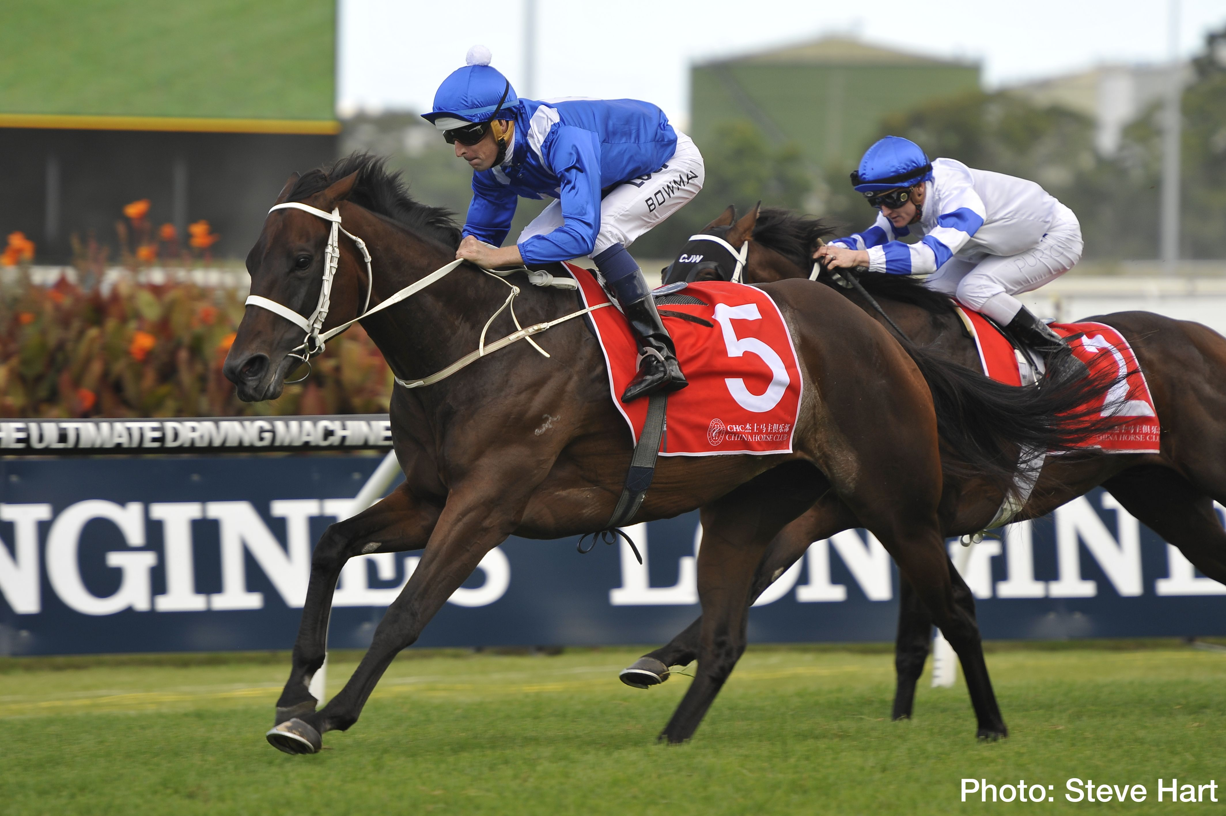 Australian Racing Star Winx Will Face Just Two Rivals When She Goes To The Post In The Group 1 Caulfield Stakes On Saturday October Horses Racing Horse Racing