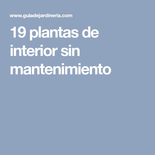 19 plantas de interior sin mantenimiento