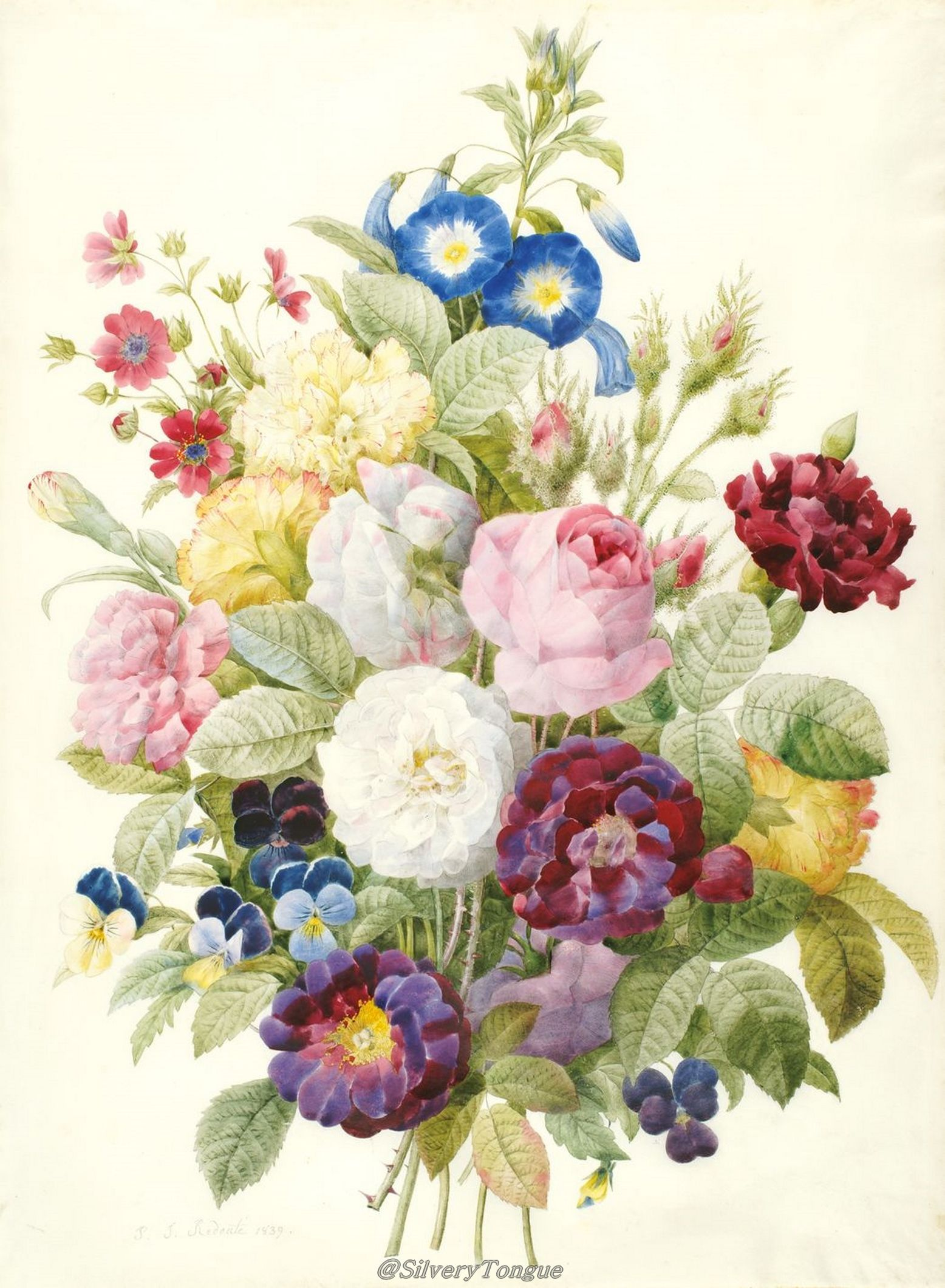 Philadelphia Society Of Botanical Illustrators Watercolor On Vellum By Pierre Joseph Redoute HI Art Accession No This Bouquet Was Painted