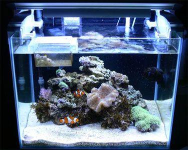 Saltwater aquarium setup hobbyist guide setting up for Aquarium nano marin