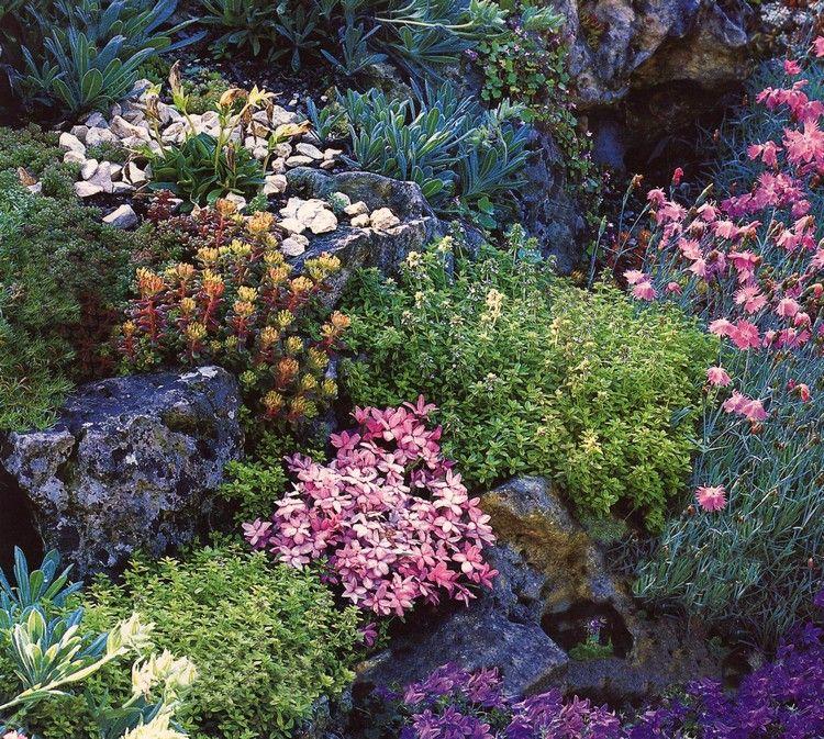 jardin alpin avec plantes de rocaille, plantes vivaces et plantes ...