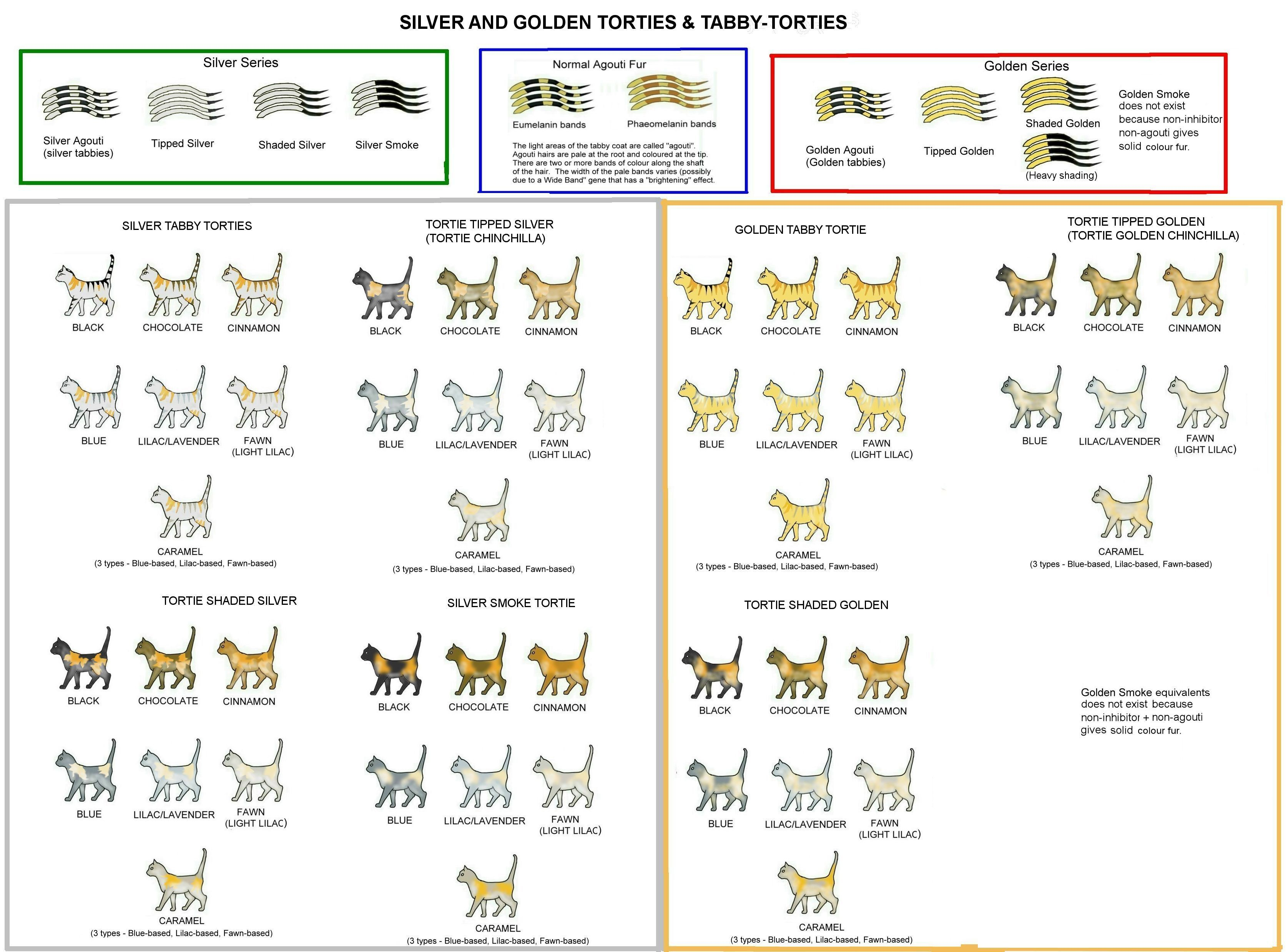 COLOUR AND PATTERN CHARTS Cat colors, Tortie,