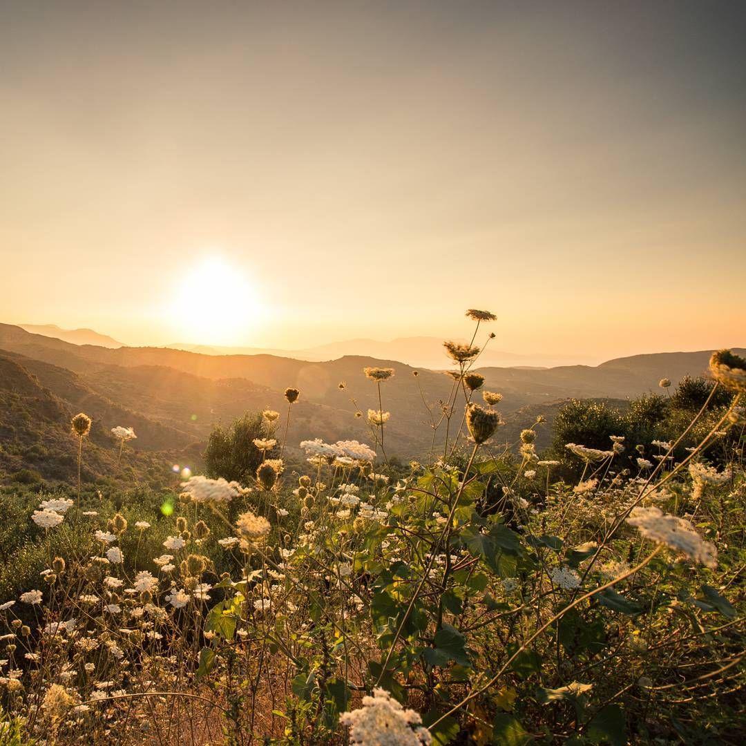 Olive trees, Crete #landscapelovers #travelgram #trippics #fastencitybelt #beautiful #scenery #instag_app #instanature #nature_seekers #wilderness #ic_landscapes #instanaturelover #peak #crete #mountainview #mountain #bestoftoday #hiking #hike #amazing #summit #view #greece #greek #greek_islands #landscape_shooter #followbyfollow #vsconature #sunset #sunsets