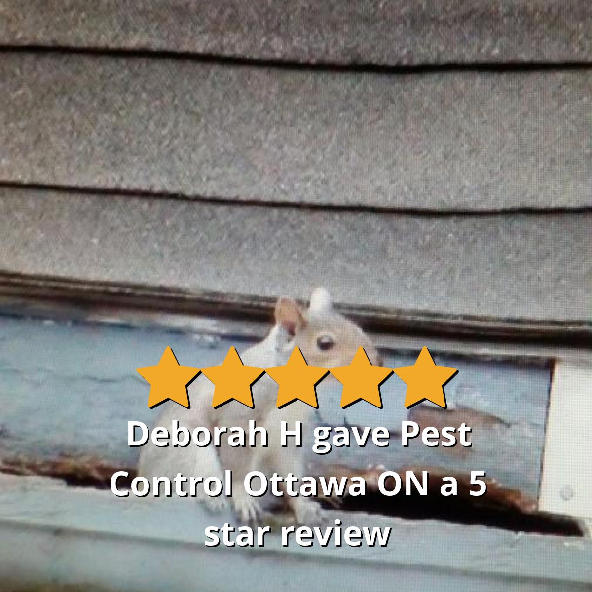 Ultrasonic Pest Repeller Reviews (Ultrasonic Pest Reject