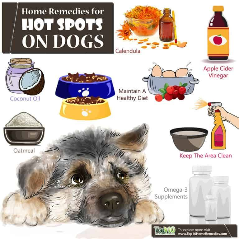 Home Remedies For Hot Spots On Dogs Top 10 Home Remedies Dog Hot Spots Dog Hot Spots Remedy Dog Hot Spots Treatment