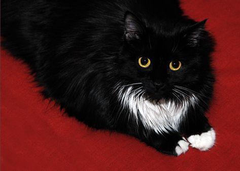 My kitty Jess, gone but not forgotten...