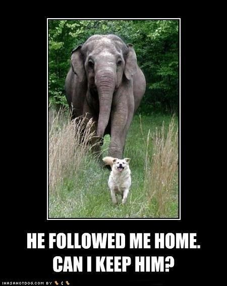 This photo was taken at the Elephant Sanctuary in Tennessee. Google it. This elephant and the dog have a beautiful story.  They're best friends.