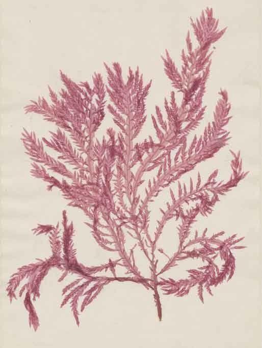 Botanical Treasures from Duke's Hidden Library - Duke Library Exhibits