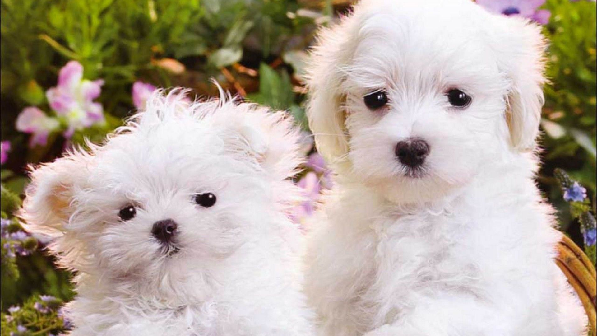 Wallpapers Funny Puppies 2021 Live Wallpaper Hd Cute Puppies Puppies Puppies Funny