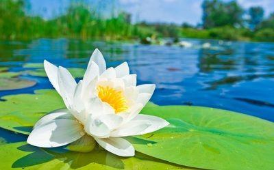 White lotus flowers beautiful images beautiful black and white white lotus flowers beautiful images beautiful black and white flowers pictures red yellow roses wallpaper hd free mightylinksfo