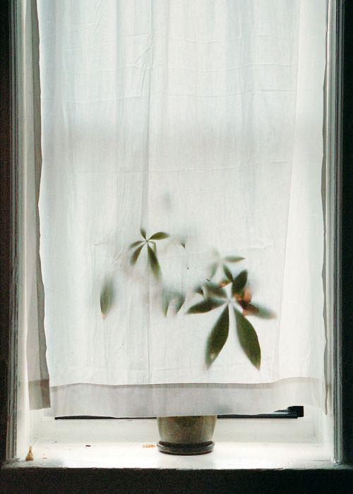 Photo of plants   shadow play