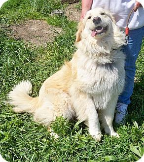 Adult Female House Trained And Knows Commands A Real Sweet Heart