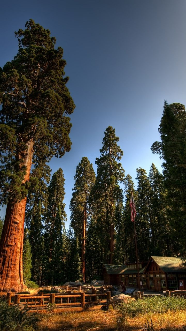 Image by aashqalmadi on Nature Sequoia national park