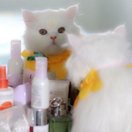 Espejito, espejito, quién es el mas bonito ?