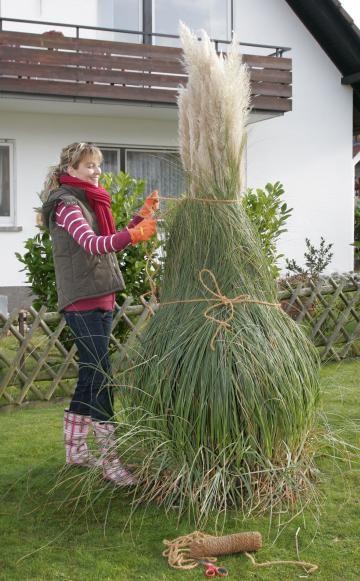 pampasgras | gärtnern | pinterest | garden, plants and garden plants, Design ideen