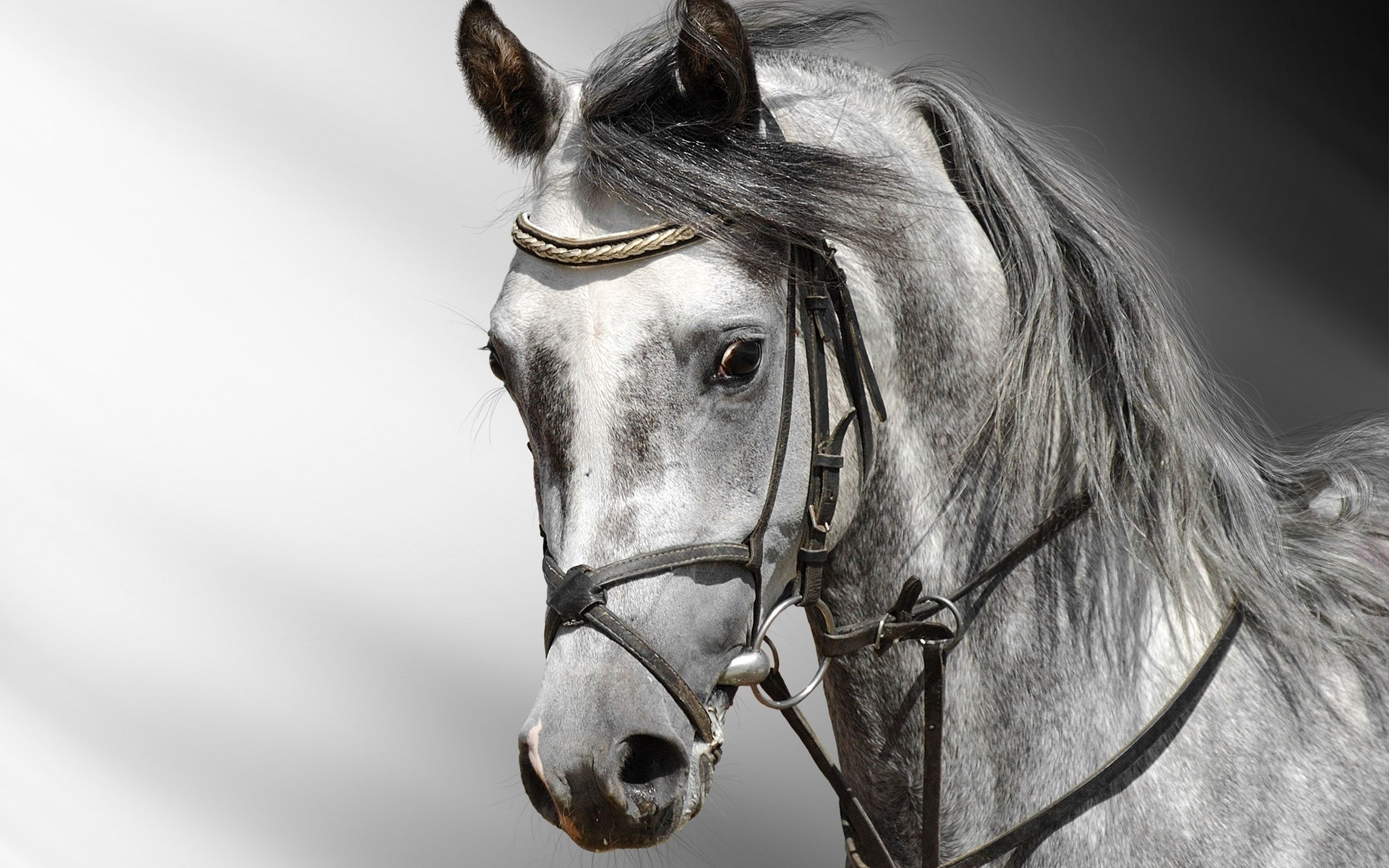 Great Wallpaper Horse Photography - fb943fed0d99877380a6f531130ceb3c  Perfect Image Reference_419392.jpg