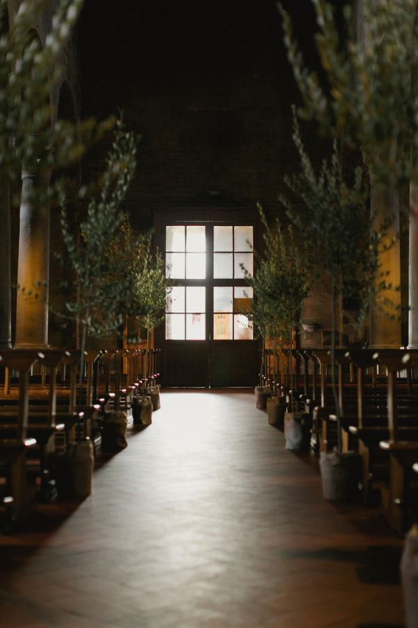 Olive Trees Wedding Decor