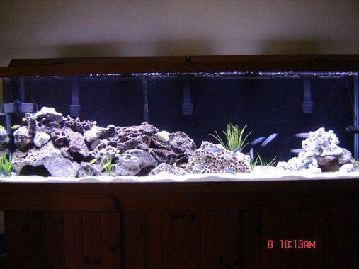 125 gallon mbuna tank fish tank ideas pinterest for 125 gallon fish tank