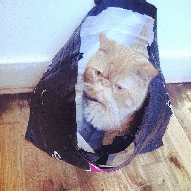 Winston The Cat Is Feeling Partial To Plastic This Morning If You