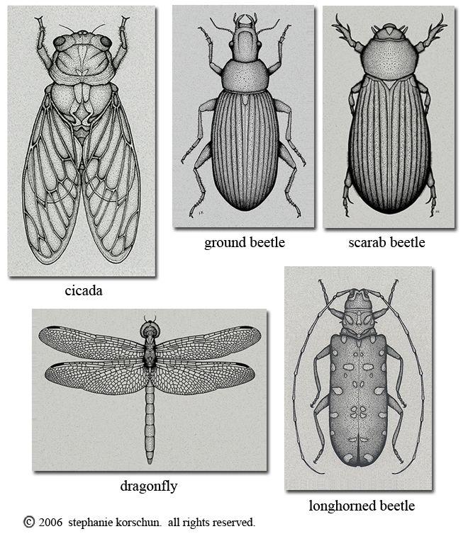 bug illustrations | keuken krijtbord | Pinterest | Insectos, Grabado ...