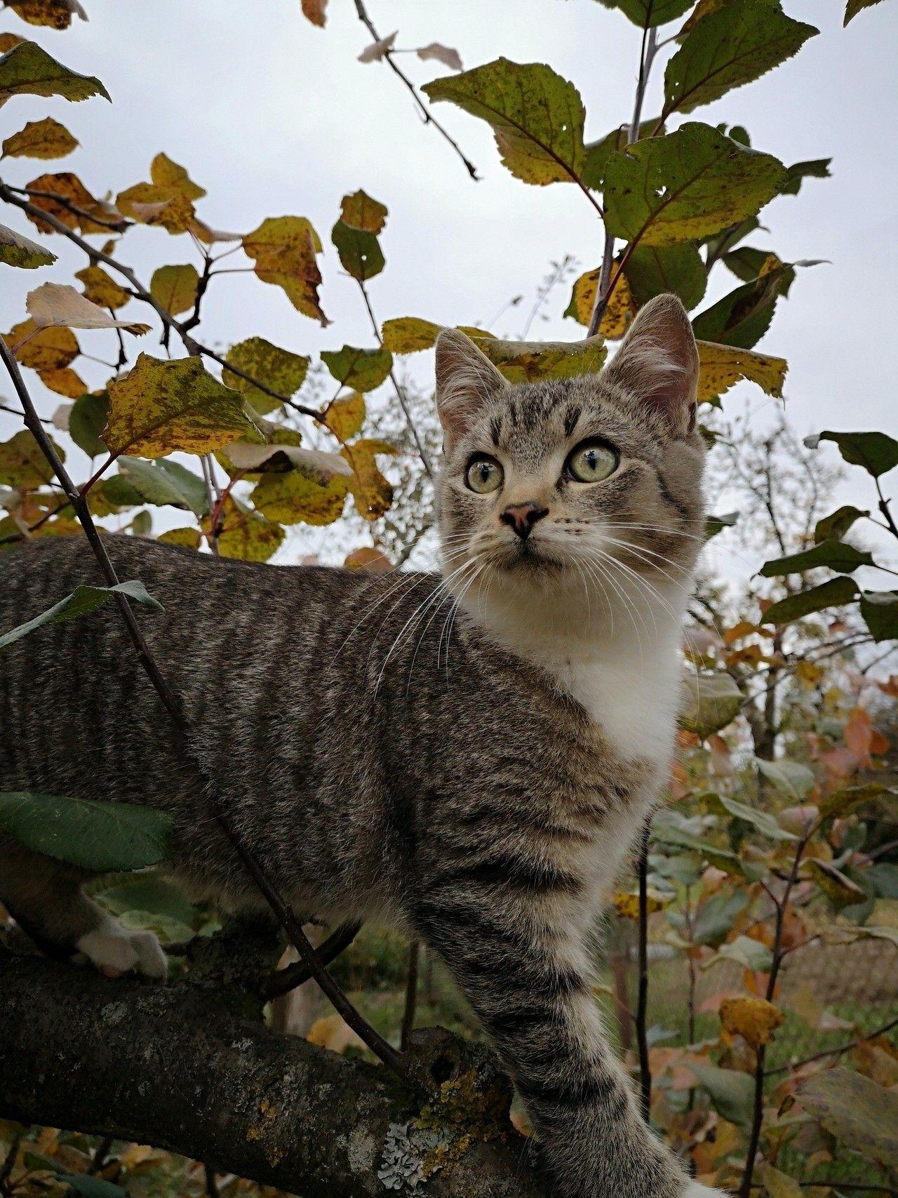 Pinterest sweetness Cats, kittens, Cute animals, Cats