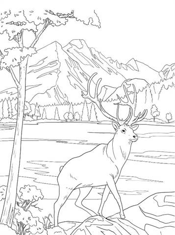 Kids N Fun Com 16 Coloring Pages Of National Parks United States Deer Coloring Pages Coloring Pages Cool Coloring Pages