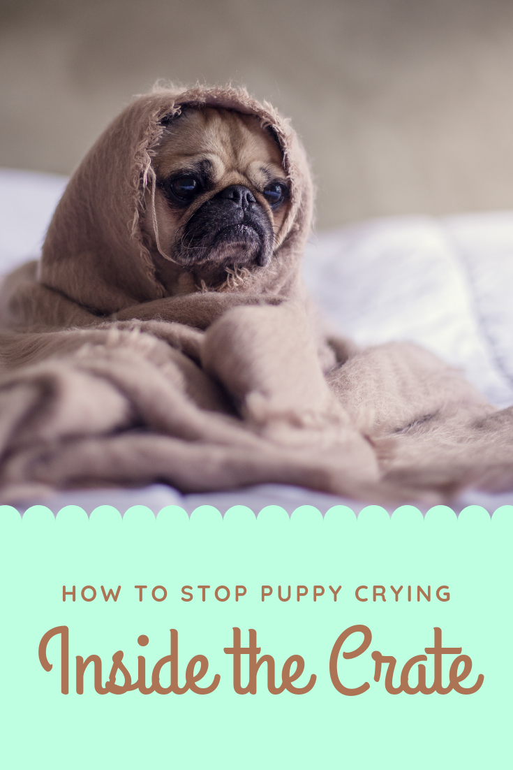 Some useful tips to Stop puppy crying at night and inside