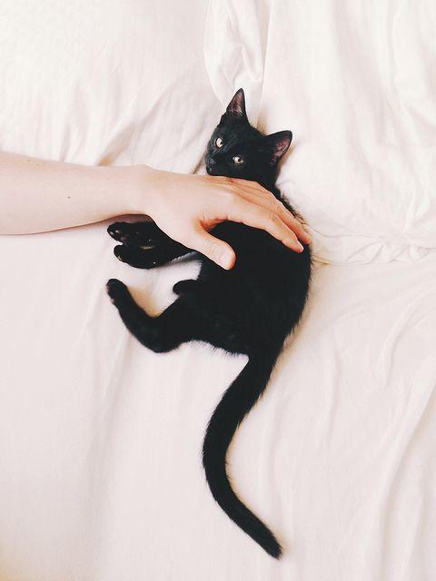 pet a pet.