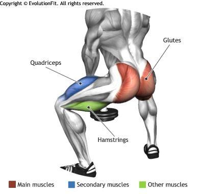 Squat Diagram Of Musclees Diy Wiring Diagrams