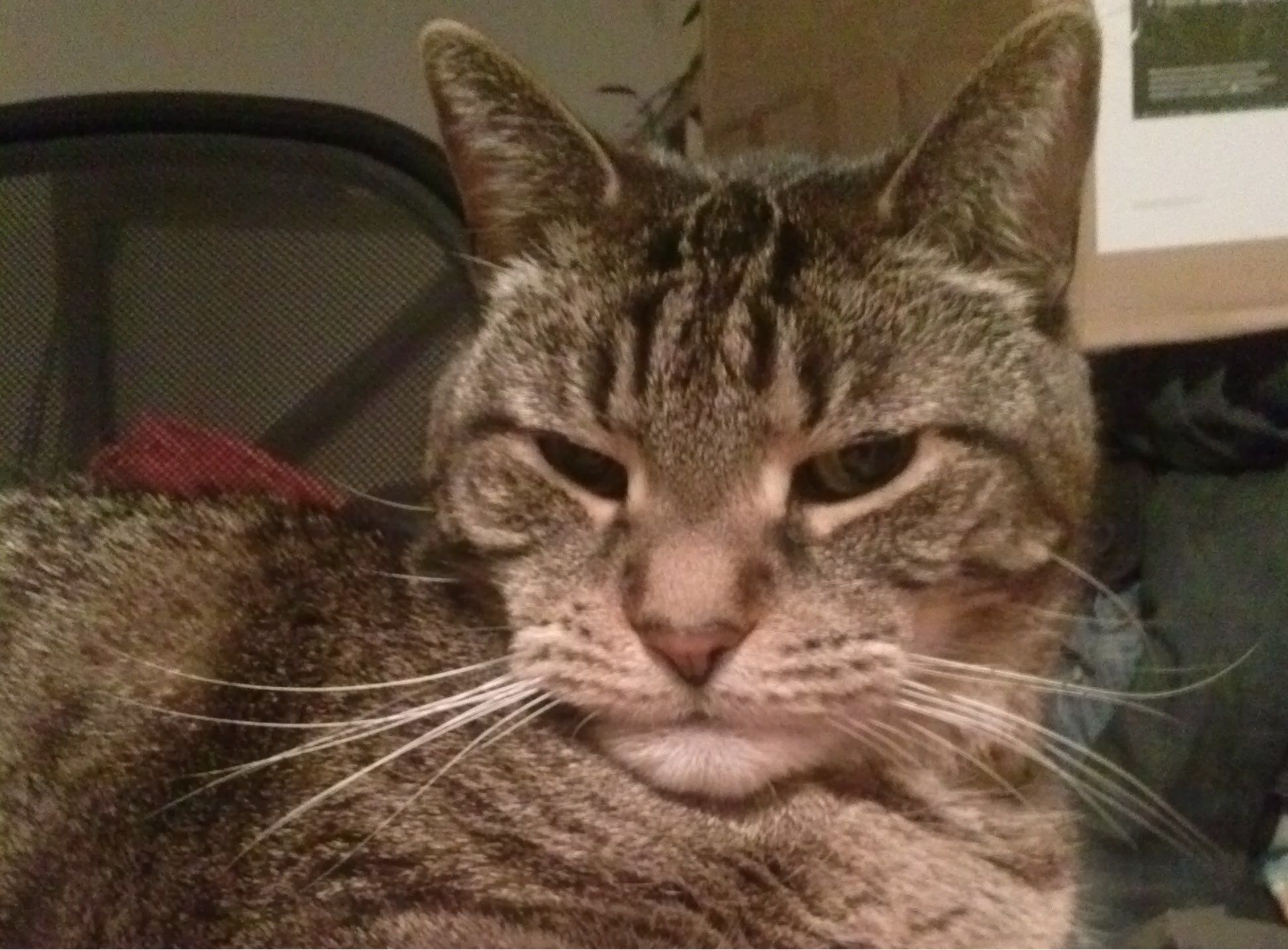34 Cats Who Are Judging You Right Now  Cattime